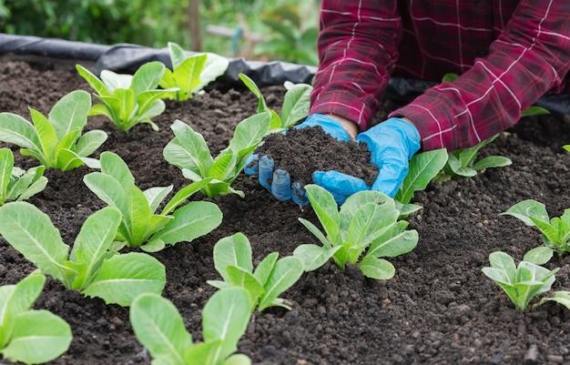 Mano dell'agricoltore che indossa un guanto di plastica che mostra un terreno perfetto in un'azienda agricola di verdure.