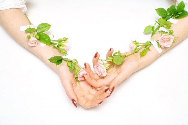 Congiuntamente i germogli rosa rosa sulle mani, su fondo bianco, isolante, concetto di cura di pelle della mano.