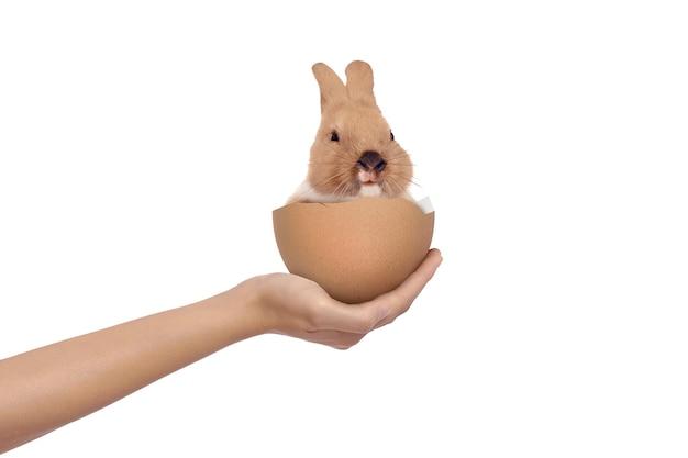 Mano che tiene un coniglietto di bambino nelle uova rotte isolate. buona pasqua