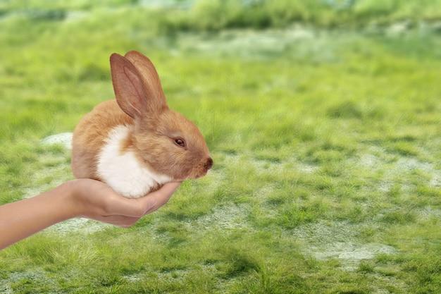 Mano che tiene un coniglietto nelle uova rotte con campo di prato. buona pasqua