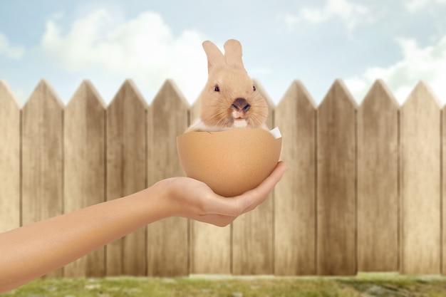 Mano che tiene un coniglietto nelle uova rotte con staccionata in legno. buona pasqua