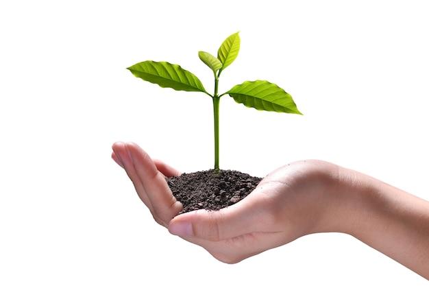 Mano che tiene e prendersi cura di una giovane pianta verde