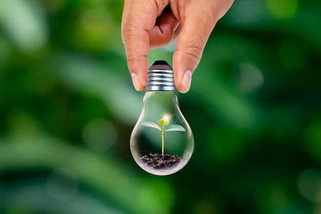 Mano che tiene lampade a risparmio energetico e piccole piante lampade a risparmio energetico in crescita