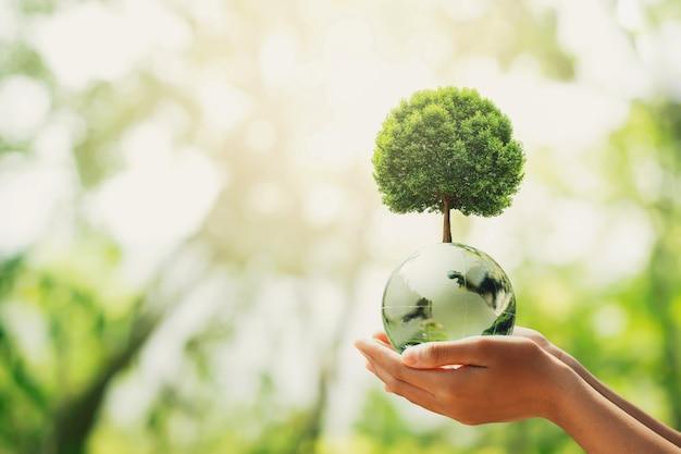 Mano che tiene la sfera del globo di vetro con la crescita degli alberi e la natura verde green