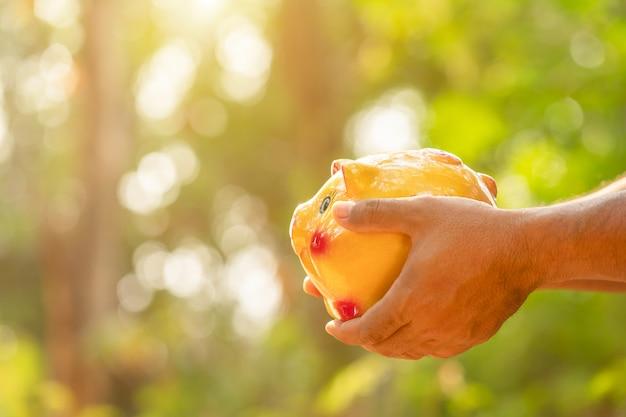 Porcellino salvadanaio dell'oro della tenuta della mano con il fondo verde della sfuocatura della natura. concetto di risparmio di denaro