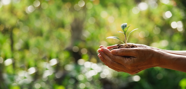 Mano che tiene una pianta verde e piccola. piante fresche verdi sul fondo della natura.