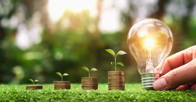 Mano che tiene la lampadina su erba verde con pianta giovane che cresce sulla pila di monete