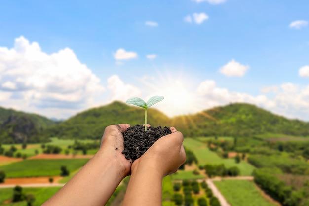 Mano che tiene il terreno con una pianta che cresce su di esso su sfondo verde naturale.