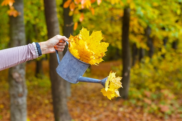 Mano che tiene l'acqua può con foglie autunnali
