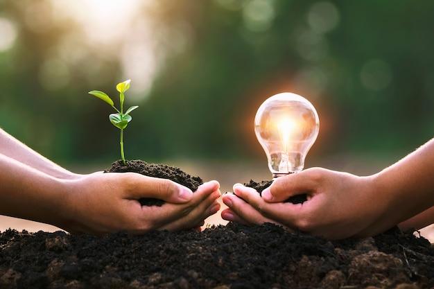 Mano che tiene pianta giovane e lampadina. concetto di risparmio energetico.