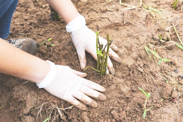 Mano che tiene la giovane pianta per piantare negli alberi della pianta del suolo nella foresta della zona