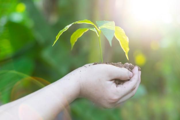 Mano che tiene giovane albero per piantare. concetto salva il mondo