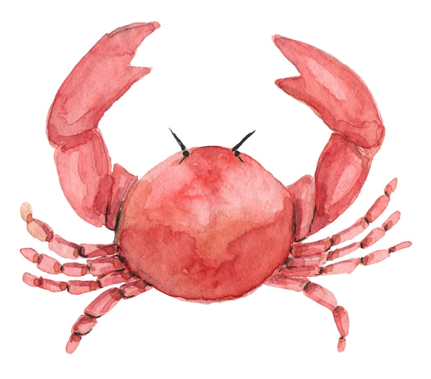 Granchio rosso dell'acquerello dipinto a mano. granchio disegnato a mano isolato su bianco