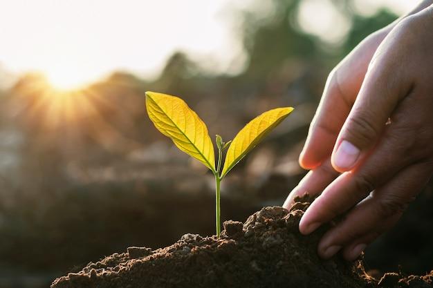 Piantare a mano germogliare nel terreno con il tramonto in giardino