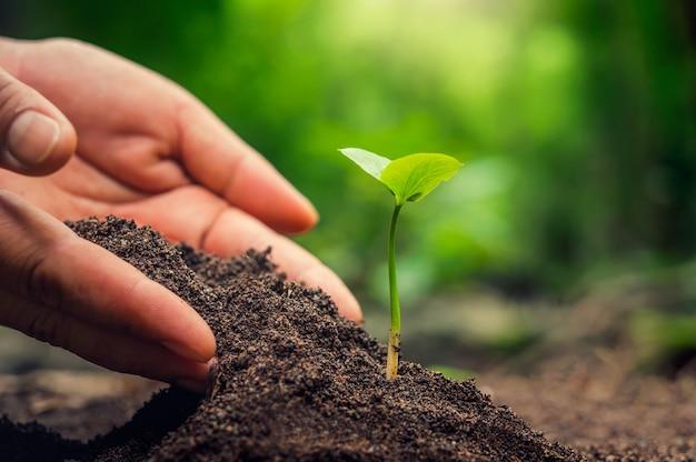 Germoglio di piantare a mano nel terreno con il tramonto