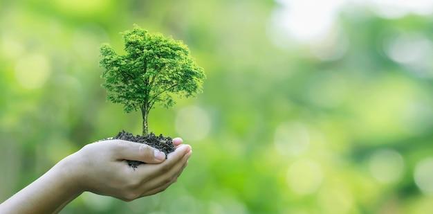 Piantare alberi a mano concetto di campagna ecologico e socialmente responsabile