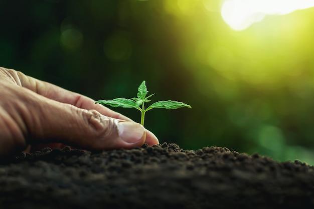 Piantare a mano un giovane albero sul suolo come concetto di salvataggio del mondo