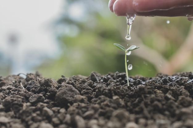 Mano versando acqua su giovane pianta che cresce alla luce del sole