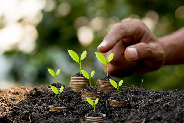 Passi mettere la moneta sul grafico crescente della pila della moneta con il fondo verde del bokeh, il concetto di investimento albero che cresce sulla moneta, finanza di affari e risparmi il concetto dei soldi
