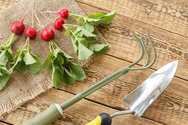 Rastrello a mano, pala su tela di sacco e ravanelli rossi maturi su vecchie tavole di legno. vista dall'alto. raccolta primaverile degli ortaggi in giardino.