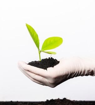 La mano del ricercatore indossa guanti di gomma che tengono la giovane pianta verde con terreno nero fertile sul palmo