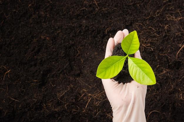 La mano del ricercatore donna indossa guanti piantine sono un albero verde che cresce piantando nel terreno fertile su terreno nero