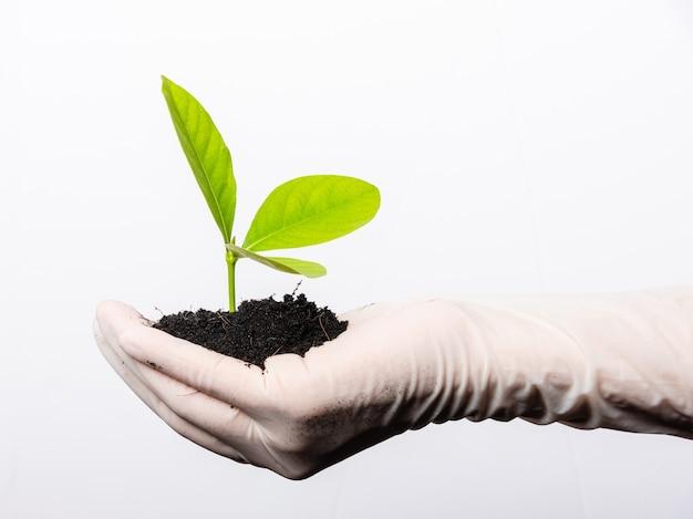 La mano della donna del ricercatore indossa guanti di gomma che tengono la giovane pianta verde con terreno nero fertile sul palmo