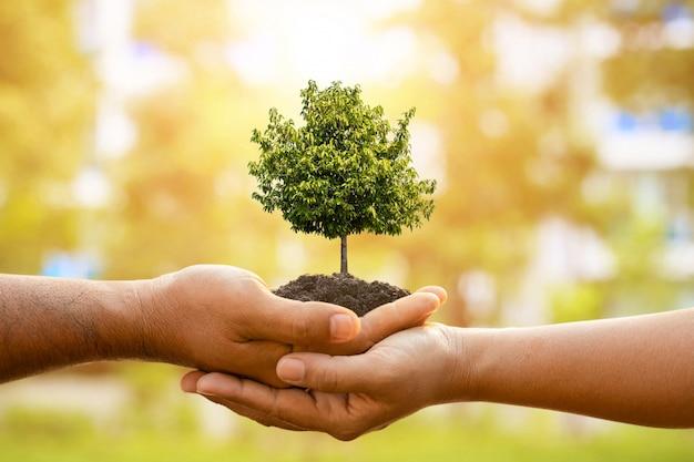 Una mano di due persone che tengono albero nel suolo su luce solare all'aperto e sfocatura verde piantare l'albero, salvare il mondo, o concetto di crescita e ambiente