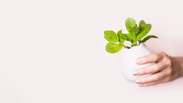 Mano e vaso con foglie di menta