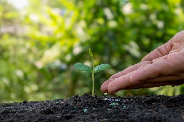 Pianta crescente di irrigazione a mano su terreno con sfondo di vegetazione sfocata