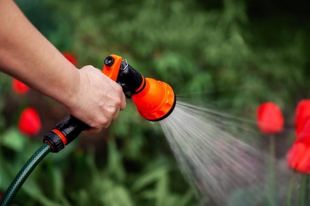 Irrigazione manuale delle piante dal tubo