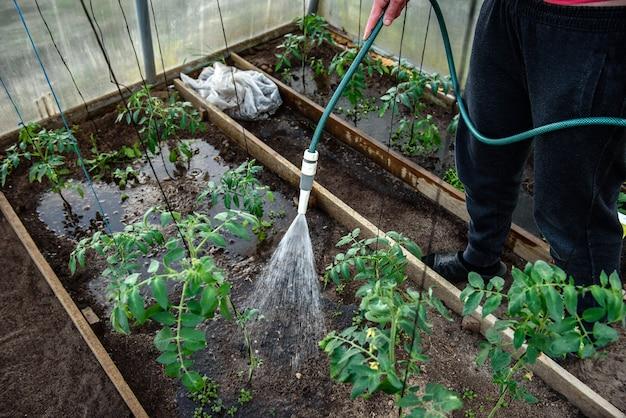 Mano che innaffia le piante in giardino.