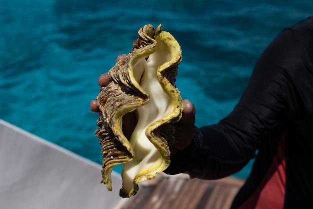 Una mano con un'enorme conchiglia dal fondo del mar rosso