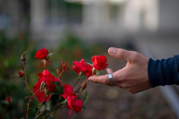 Mano con anelli che accarezzano alcuni fiori rossi in natura