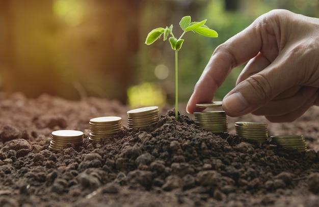 La mano e la giovane pianta verde con la pila coniano su terra per crescere
