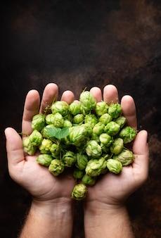 Manciata di coni di luppolo verde nelle mani dell'uomo ingredienti per la produzione della birra