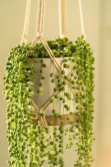 Fioriera in macramè di cotone fatta a mano per pianta d'appartamento da interno