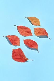 Biglietto di auguri decorativo fatto a mano da foglie di vite colorate con ombre dure