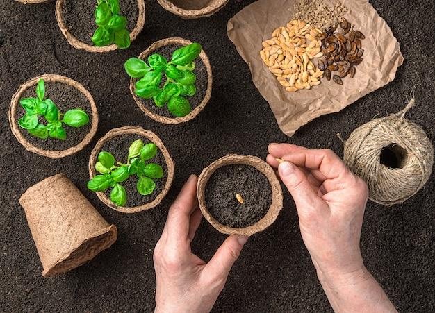 Le mani di una donna adulta piantano semi in vaso vista dall'alto orizzontale