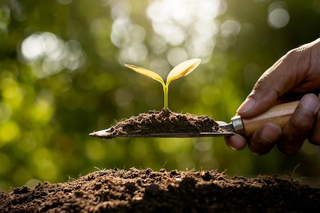 Le mani degli uomini agricoli usano pale di piantine per essere piantate nel terreno fertile mentre splende la luce del sole del mattino.