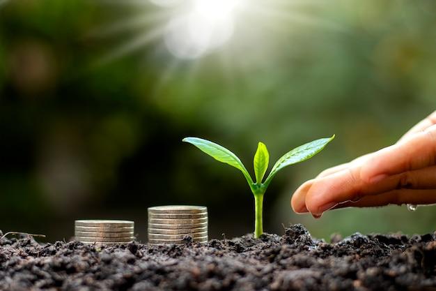 Le mani stanno innaffiando le piante che crescono sul terreno e le pile di monete
