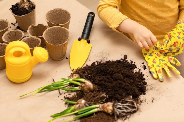 Le mani di un bambino hanno piantato semi di bulbi da fiore al coperto a casa