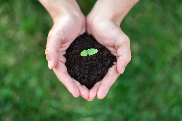 Le mani tengono il terreno con un germoglio. concetto di natura. posto per il tuo testo.