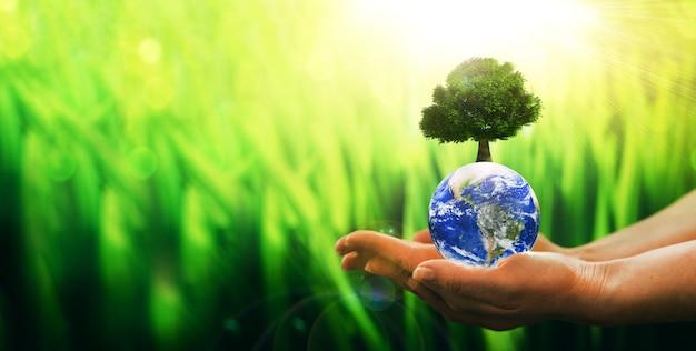 Le mani che tengono il globo di terra di cristallo e l'albero in crescita arbor day environment salvano il pianeta pulito