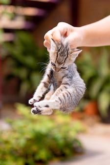 Mani che tengono un simpatico gattino in giardino