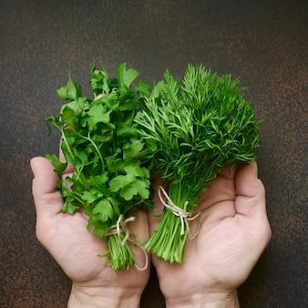 Mani che tengono aneto fresco e prezzemolo verdi