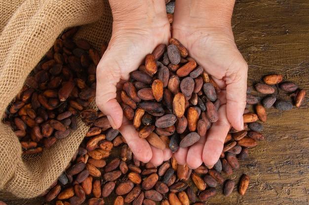 Mani che tengono le fave di cacao crudo appena raccolte sopra un sacchetto con le fave di cacao.
