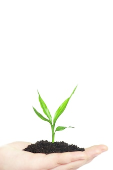 Mani che tengono il nuovo concetto di vita della piccola pianta verde