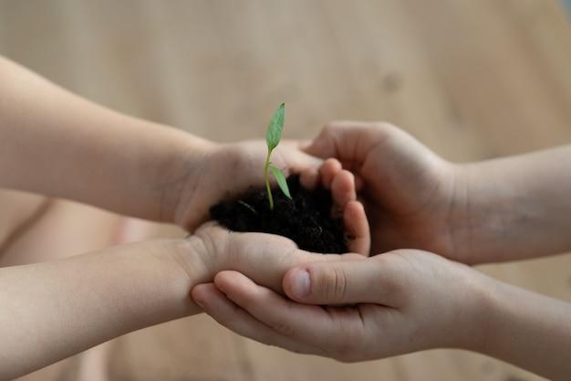 Mani che tengono una giovane pianta verde. giornata mondiale dell'ambiente e mani dei bambini. concetto di ecologia