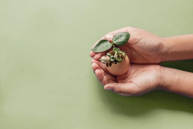 Mani che tengono la piantina in gusci d'uovo, educazione montessori, responsabilità sociale delle imprese csr, concetto di vita sostenibile eco-verde, zero rifiuti, plastica libera, giornata mondiale dell'alimentazione, consumo responsabile